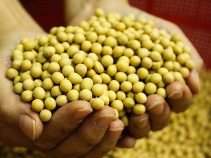 """The prices of oilseeds and cereals have gone """"wild"""" –"""