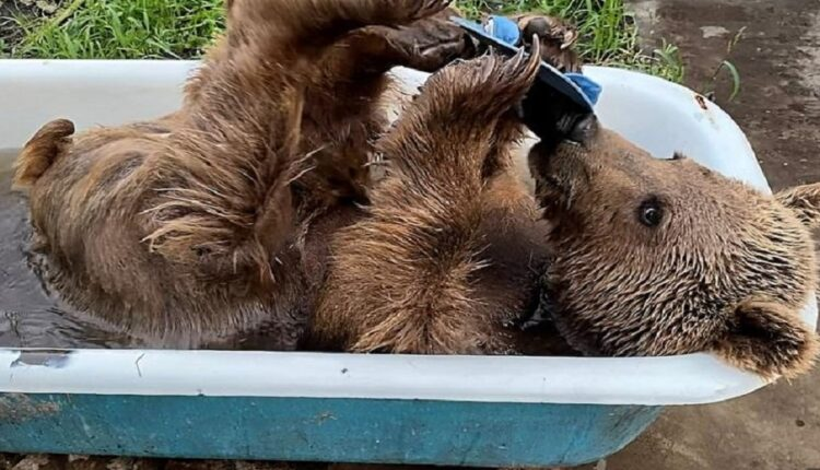Forget the troubles, do like the Balu bear that refreshes
