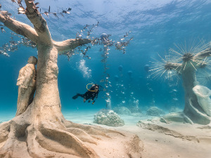 RTS :: Underwater forest in the middle of the Mediterranean