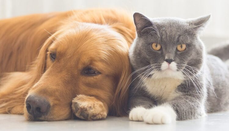 Kidnapping of pets in the UK is considered a criminal