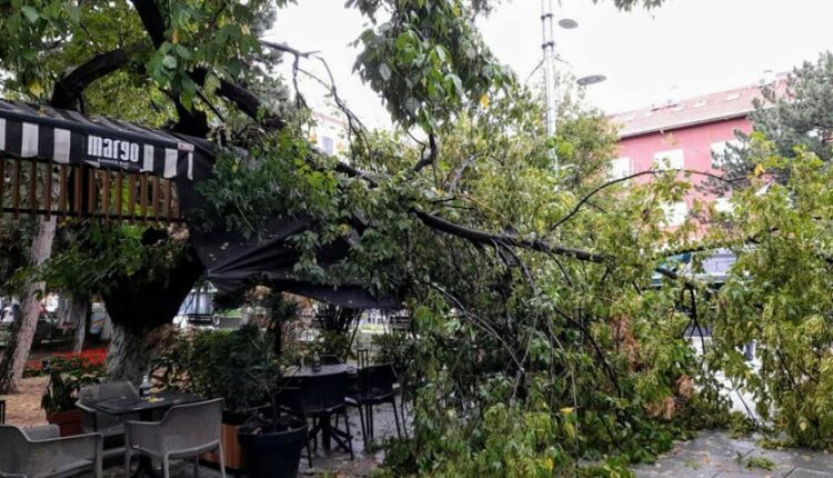 Strong winds cut down a tree in Prishtina